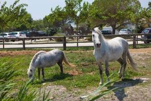 Guzel-Atlar-Diyarı-Camargue