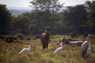 Kenya (14)