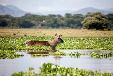 Kenya (18)