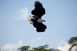 Kenya (20)