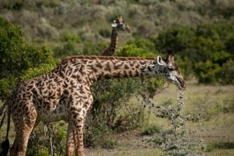 Kenya (22)