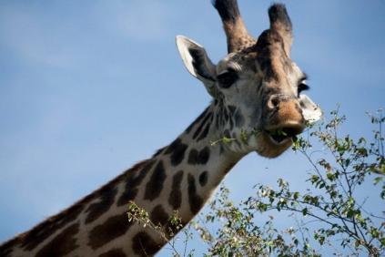 Kenya (23)
