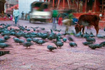 nepal 17.03.14 (2)