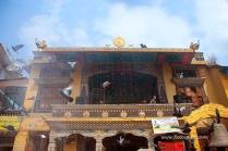 nepal 17.03.14 2_1