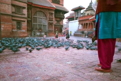 nepal 17.03.14 (71)